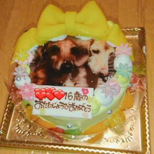ロリアンさんのフォトケーキ