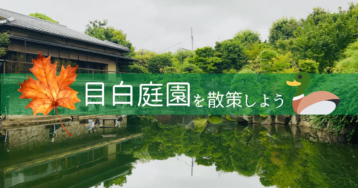 目白庭園ではカルガモ親子・紅葉ライトアップが楽しめる癒しの日本庭園です